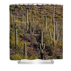 Shower Curtain featuring the photograph Beautiful Desert Morning by Elaine Malott