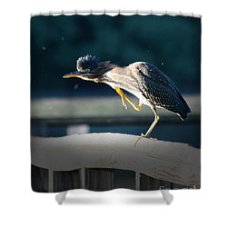 Shower Curtain featuring the photograph Beautiful Green Heron by Anita Oakley
