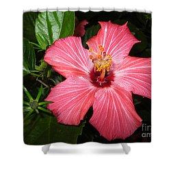 Beautiful Hibiscus Shower Curtain by Oksana Semenchenko