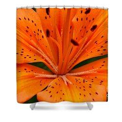 Beautiful Lily Shower Curtain by Carol Lynch