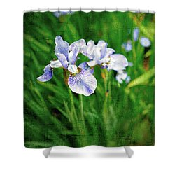 Beautiful Louisiana Hybrid Iris Shower Curtain