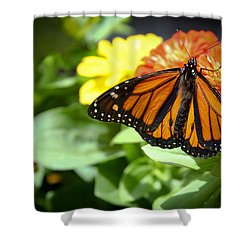 Beautiful Monarch Butterfly Shower Curtain