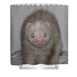 Beautiful Panda Ferret Shower Curtain by Belinda Lee