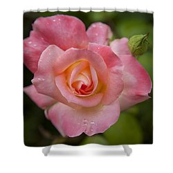 Shades Of Pink And Green Shower Curtain by David Millenheft