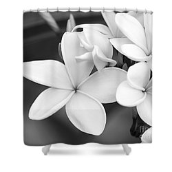 Beautiful Plumeria In Black And White Shower Curtain