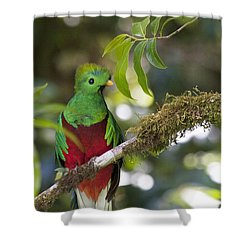 Beautiful Quetzal 1 Shower Curtain by Heiko Koehrer-Wagner
