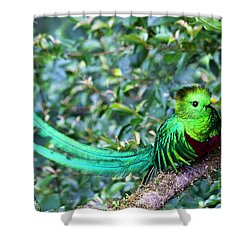Beautiful Quetzal 3 Shower Curtain