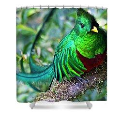 Beautiful Quetzal 4 Shower Curtain by Heiko Koehrer-Wagner