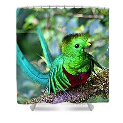 Beautiful Quetzal 5 Shower Curtain by Heiko Koehrer-Wagner