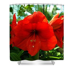 Beautiful Red Blossoms Shower Curtain by Jeff Swan