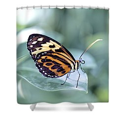 Beautiful Red Cracker Butterfly Shower Curtain