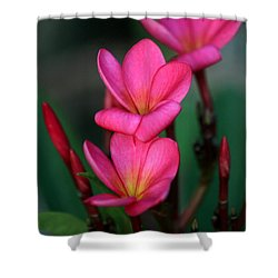 Beautiful Red Plumeria Shower Curtain