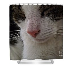 Shower Curtain featuring the photograph Beautiful Slumber by Robyn King