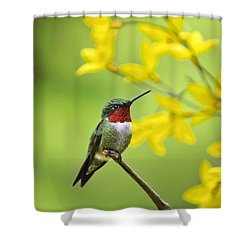 Beautiful Summer Hummer Shower Curtain