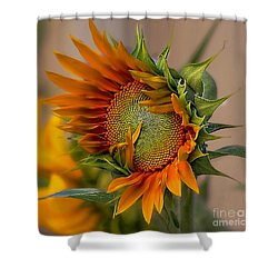 Beautiful Sunflower Shower Curtain by John  Kolenberg