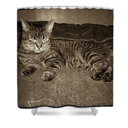 Shower Curtain featuring the photograph Beautiful Tabby Cat by Absinthe Art By Michelle LeAnn Scott