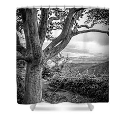 Beautiful Tree Looking Down On A Tropical Valley Shower Curtain by Edward Fielding