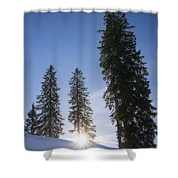 Beautiful Trees On A Sunny Winter Day Shower Curtain by Matthias Hauser