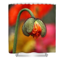 Beautiful Ugly Shower Curtain by Rona Black