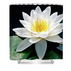 Beautiful Water Lily Capture Shower Curtain by Ed  Riche