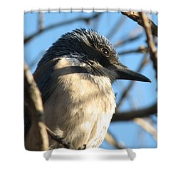 Beautiful Western Scrub Jay Shower Curtain by Patricia Barmatz
