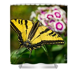 Beautiful Western Tiger Swallowtail Butterfly On Spring Flowers. Shower Curtain by Jamie Pham
