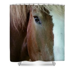 Shower Curtain featuring the photograph Beautiful Within Him Was The Spirit - 2 by Linda Shafer