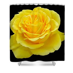 Beautiful Yellow Rose Flower On Black Background  Shower Curtain by Tracey Harrington-Simpson