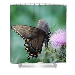 Beauty And Thistle Shower Curtain