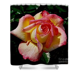 Shower Curtain featuring the photograph Beauty At Its Best by Debby Pueschel