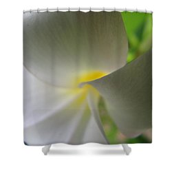 Shower Curtain featuring the photograph Beauty by Beth Vincent