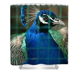 Shower Curtain featuring the photograph Beauty In Captivity by Randi Grace Nilsberg
