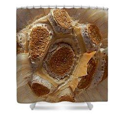 Shower Curtain featuring the digital art Beauty In Garlic by Aliceann Carlton