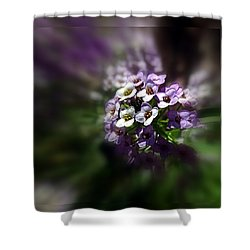 Beauty Of Alyssium Shower Curtain by Nick Kloepping