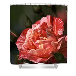 Shower Curtain featuring the photograph Beauty Of Rose by Joy Watson