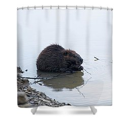 Beaver In The Shallows Shower Curtain by Chris Flees