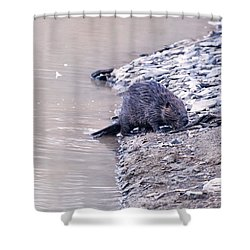 Beaver On Dry Land Shower Curtain by Chris Flees