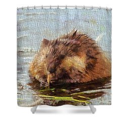 Beaver Portrait On Canvas Shower Curtain by Dan Sproul