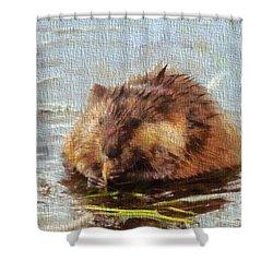 Beaver Portrait On Canvas Shower Curtain