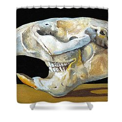 Beaver Skull 1 Shower Curtain by Catherine Twomey