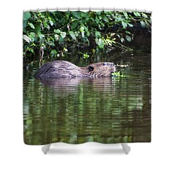 beaver swims in NC lake Shower Curtain