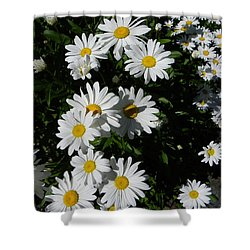 Bed Of Daisies Shower Curtain by KD Johnson