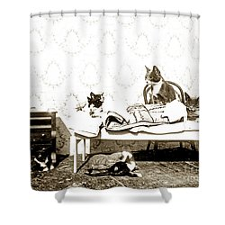 Shower Curtain featuring the photograph Bed Time For Kitty Cats Histrica Photo Circa 1900 by California Views Mr Pat Hathaway Archives
