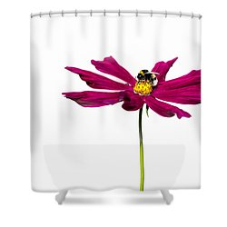 Bee At Work - Featured 3 Shower Curtain by Alexander Senin