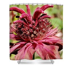 Bee Balm Details Shower Curtain