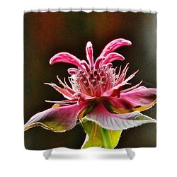 Shower Curtain featuring the photograph Bee Balm's Beauty by VLee Watson