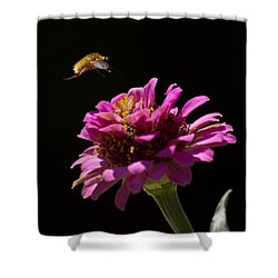 Bee Fly In Flight Shower Curtain by Shelly Gunderson