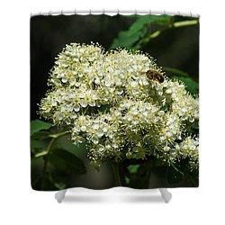 Bee Hovering Over Rowan Truss - Featured 3 Shower Curtain by Alexander Senin