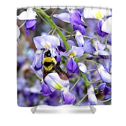 Bee In The Wisteria Shower Curtain by Will Borden