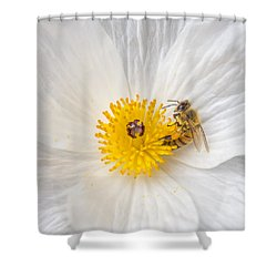 Bee On A Poppy Shower Curtain